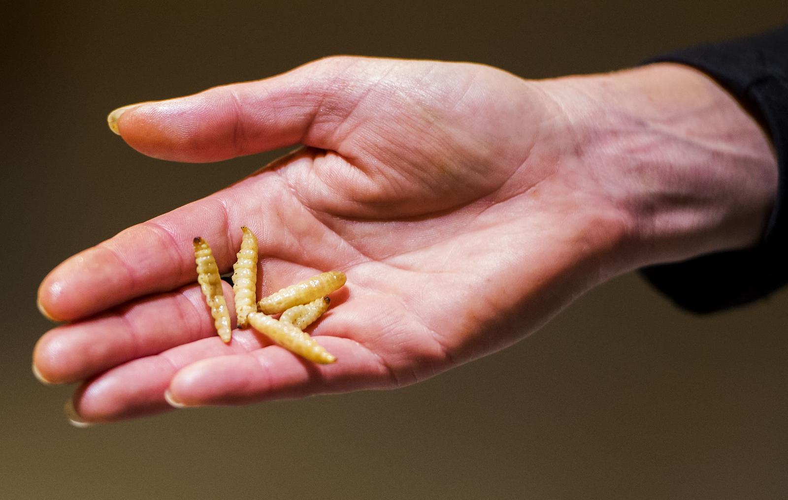 Fotorepo: Insecten eten bij Jumbo