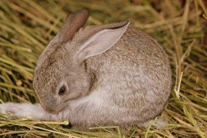 Acht supermarkten stoppen met konijn