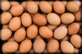 Eieren nog steeds duur door fipronilcrisis